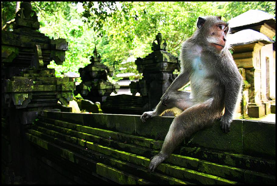 8 Monkey Temple 2