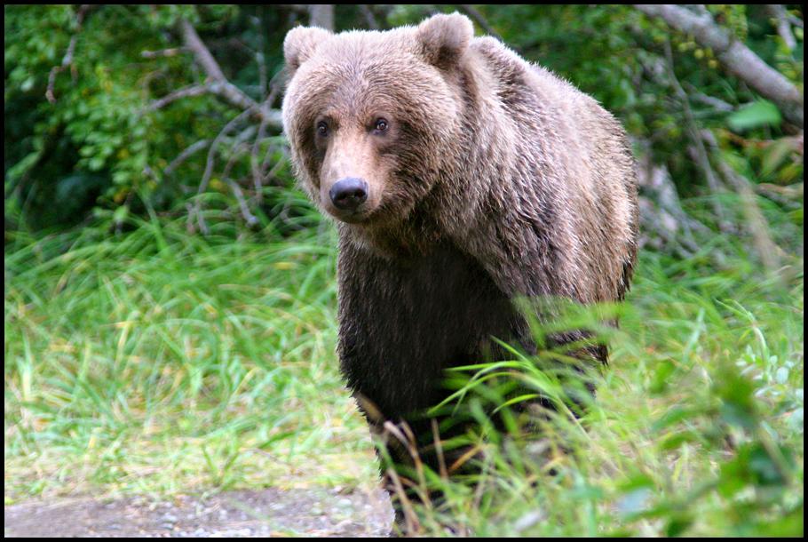 bear 29