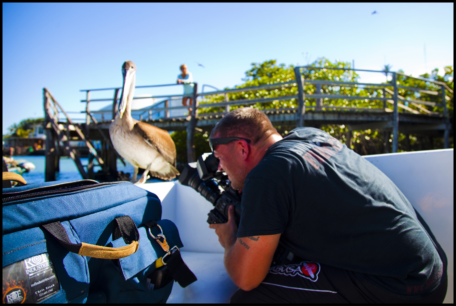 Getting Pelican Shot