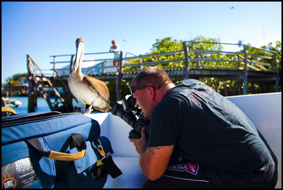 Getting Pelican Shot