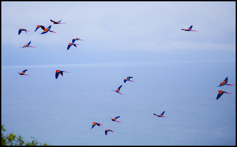 Macaws Of Eighteen- small