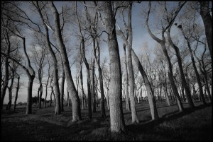 b-w trees with blue- small