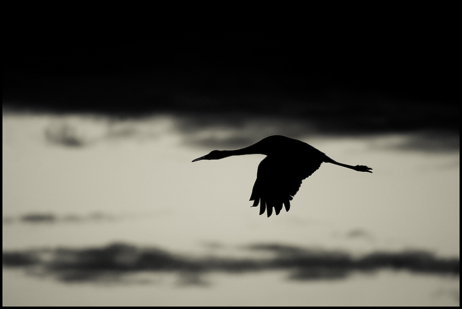 sil crane- small